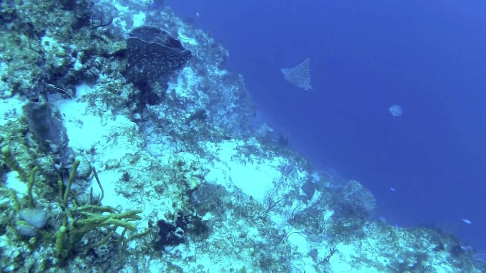 Blue Angel IDC Center 5 days of diving